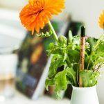 Lápiz publicitario ecológico - El lápiz que quiere ser planta