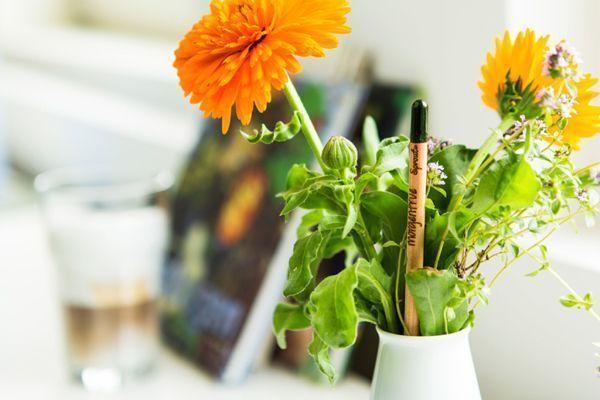 Lápiz publicitario ecológico – El lápiz que quiere ser planta