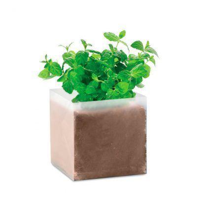 Planta menta personalizable